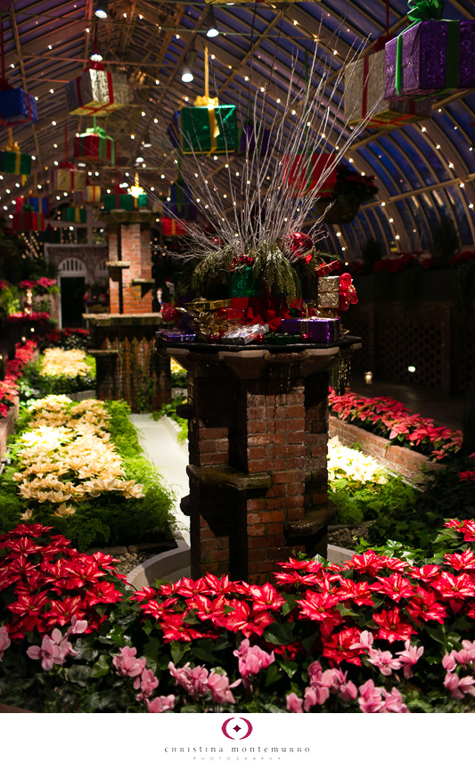 Phipps Winter Flower Show 2013 -1