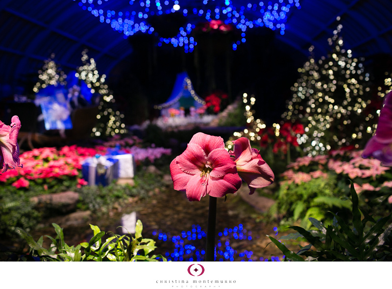 Phipps Winter Flower Show 2013 -2